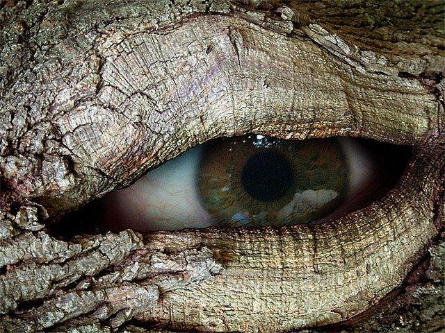 ent-eye