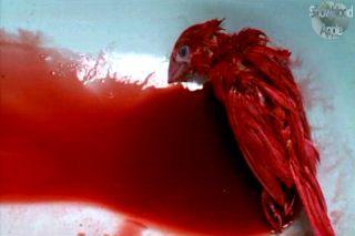 memento-mori-bird-blood